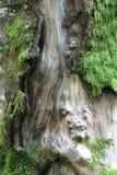 Muschio su un albero Fotografia Stock