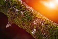 Muschio su un ramo di albero immagine stock libera da diritti