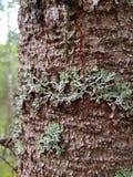 Muschio su un tronco di albero Fotografia Stock