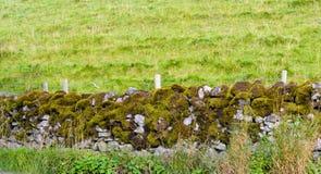 Muschio su una parete di pietra Immagini Stock Libere da Diritti