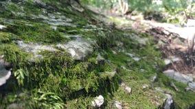 Muschio su una roccia fotografia stock