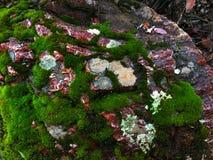 Muschio su una roccia Immagini Stock Libere da Diritti