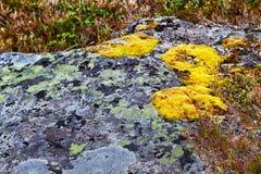 Muschio su una roccia Fotografie Stock