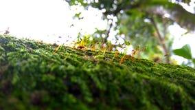 Muschio sugli alberi Fotografia Stock