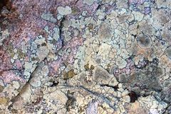 Muschio sul fondo delle rocce Fotografie Stock Libere da Diritti