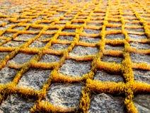 Muschio sul percorso del granito Immagini Stock