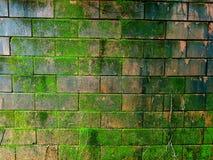 Muschio sul recinto del mattone Fotografia Stock