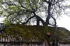 Muschio sul tetto Fotografie Stock Libere da Diritti