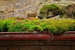Muschio sul tetto nel villaggio di Harasov il 16 gennaio in repubblica Ceca immagine stock