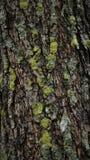 Muschio sull'albero dopo la pioggia Fotografia Stock