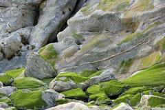 Muschio sull'estratto della roccia Fotografia Stock Libera da Diritti