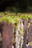 Muschio sulla pietra Fotografie Stock Libere da Diritti