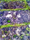 Muschio sulla pietra scura Immagini Stock