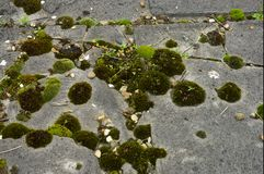 Muschio sulla pietra tombale Immagine Stock Libera da Diritti