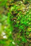 Muschio sulla scogliera pietrosa a sorgente Immagini Stock Libere da Diritti