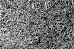 Muschio sulla vecchia superficie della pietra in bianco e nero Immagine Stock