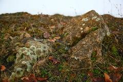 Muschio sulle rocce Immagini Stock