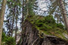 Muschio sulle rocce dell'arenaria nel legno Fotografia Stock Libera da Diritti