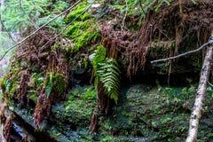 Muschio sulle rocce dell'arenaria nel legno Fotografie Stock Libere da Diritti