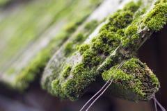 Muschio sulle vecchie mattonelle di tetto Fotografia Stock Libera da Diritti