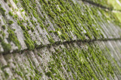 Muschio sulle vecchie mattonelle di tetto Fotografie Stock