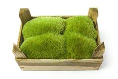 Muschio in una casella di legno fotografia stock