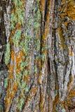 Muschio variopinto su un albero Immagini Stock Libere da Diritti