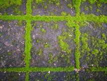 Muschio verde immagini stock