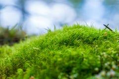 Muschio verde Fotografie Stock