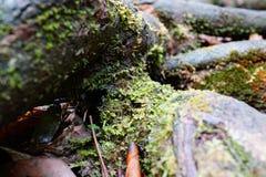 Muschio verde Fotografia Stock Libera da Diritti