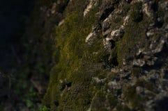 Muschio verde immagini stock libere da diritti