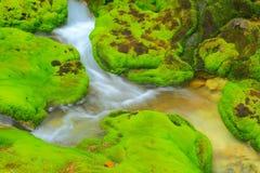 Muschio verde con il flusso dell'acqua immagine stock