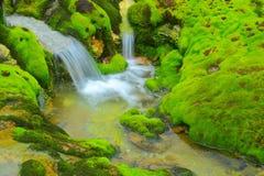 Muschio verde con il flusso dell'acqua fotografia stock libera da diritti