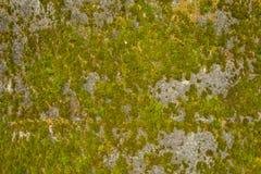 Muschio verde degli ambiti di provenienza astratti Immagini Stock Libere da Diritti