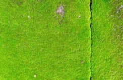 Muschio verde del primo piano sulla parete Fotografie Stock Libere da Diritti