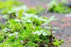 Muschio verde e piccola dell'albero destra in basso Fotografia Stock Libera da Diritti