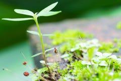 Muschio verde e piccolo albero in cima lasciati Fotografia Stock