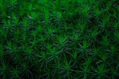 Muschio verde fresco Fotografia Stock