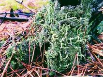 Muschio verde nella foresta Fotografie Stock