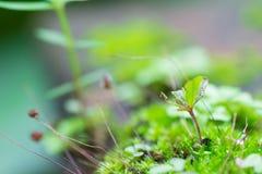 Muschio verde o piccola dell'albero destra in basso Immagine Stock Libera da Diritti