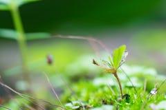 Muschio verde o piccolo dell'albero primo piano di destra in basso Fotografie Stock