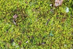 Muschio verde su Forest Ground Background Fotografia Stock