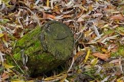 Muschio verde su un albero Fotografia Stock