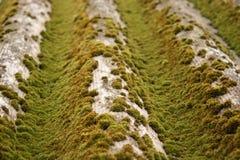 Muschio verde sull'ardesia Primo piano di muschio fotografia stock