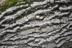 Muschio verde sulla corteccia di un albero fotografia stock libera da diritti