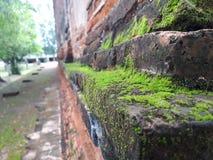 Muschio verde sulla parete del vecchio tempio Fotografia Stock