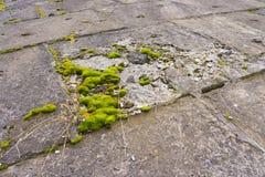Muschio verde sulle lastre di cemento armato Fotografie Stock Libere da Diritti