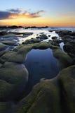 Muschio verde sulle rocce al tramonto Immagini Stock Libere da Diritti
