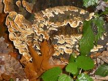 Muschrooms, murgröna och sidor i skog fotografering för bildbyråer