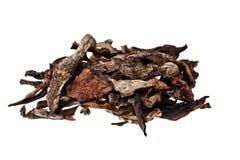 Muschrooms secou Imagens de Stock Royalty Free